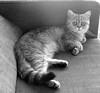 Ling resting on my sofa (_Xti_) Tags: gato gatos cat cats exotic persian exoticcat exoticcats lua ling katzen gatto gatti kätzchen méo kitty furry cutecat feline felines gata gatas chat silver golden sorthair pet pets eyes kaz ket mau exoticsorthair fantastic