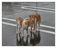 Rain Dogs por bekon