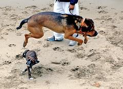 Dog Leapfrog!!