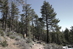 Reno Trail (k2ski) Tags: reno trees landscape painting photoshop deleteme deleteme2 deleteme3 deleteme4 deleteme5 deleteme6 deleteme7 deleteme8 deleteme9 deleteme10
