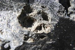 """Tiny Red Spiders in Obsidian (view """"Full Size"""") (Brian W. Tobin) Tags: easternsierras"""