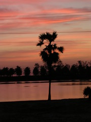 Calm Palm (Ravages) Tags: morning pink india black color tree colours horizon cyan magenta roadtrip palm indianarchive shilloutte tamilnadu indianness