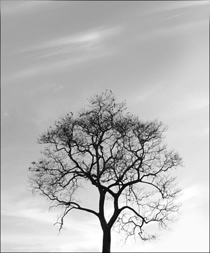 black and white tree photos. Black and white tree