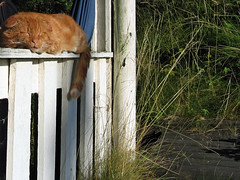 Resting (Steffe) Tags: resting relaxing hot warm sun cat pet svanspervot veranda bergdalen tungelsta sweden summer interestingness1 yf top20fav2005