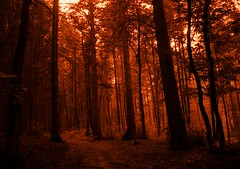 Magical Forest (Fugue) Tags: forest trees sepia oberursel frankfurt taunus germany
