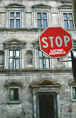 Florence Stop Sign (Thomas Hawk) Tags: old italy building animals sign architecture florence eating 10 fav20 stop stopsign firenze written fav10