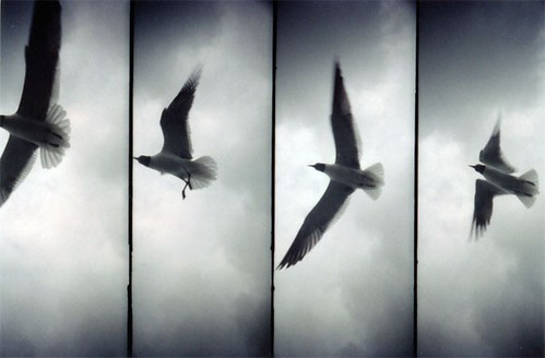 Seagull / Matt Long