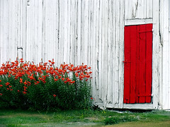 Pastoral* (Imapix) Tags: voyage travel flowers canada art nature topv111 barn canon photography photo interestingness topf75 bravo foto photographie image quebec topv1111 100v10f qubec topf150 imapix yourfavpix favpix topfavpix gatangbourque gatanbourque copyright2006gatanbourqueallrightsreserved 123hallofame gaetanbourque pix50 pix100 pix200 imapixphotography gatanbourquephotography