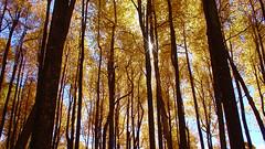 Twinkle in the trees - by VJ_fliks