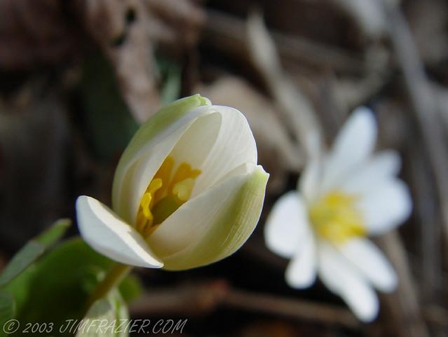 Nelson Lake Flower