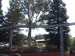 Circus Tree