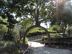Circus Tree 2