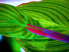 Plant (Creativity+ Timothy K Hamilton) Tags: plant color green leaves creativity leaf intense saturated colore top20stills saintlouis stl catchycolor farbe cor couleur 97 brightcolor soulard kleur farge    tkh timothykhamilton creativityplus tozero