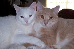 Just the Two of us (Gail S) Tags: cats macro topv111 cat nose kitten pair kittens pinky whiskers gato top20catpix kodakdx7630zoom rescued rescuedcat catcouples flickrinterestingness thepuss pet500