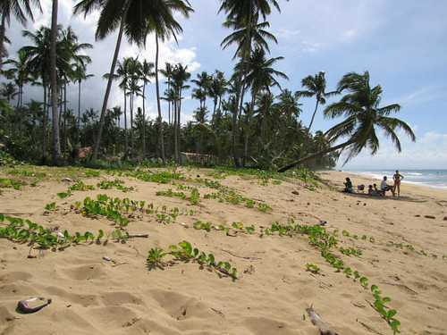 Sandy vegetation