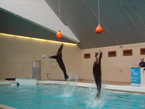 Dolphinarium_24