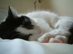 Dizzy Wizzy (highglosshighs) Tags: 2005 cats white black home scotland beans furry august paws dizzy loveliness