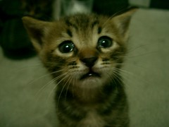forgive me (Marchnwe) Tags: cats
