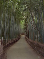Path through bamboo (MShades) Tags: japan kyoto bamboo arashiyama    tenryuji