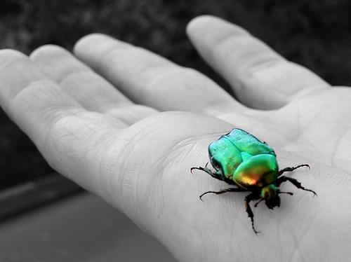 a bug's life, I guess