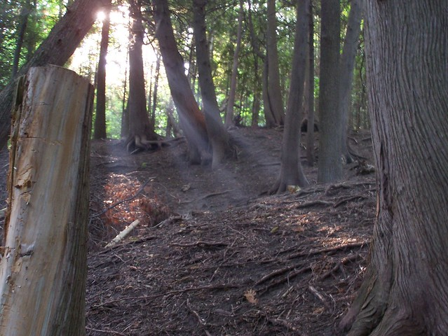 Sunbeams in the dark forest