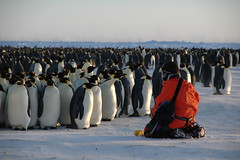 Attack of the clones (BrynJ) Tags: 500plus seasons topv1111 antarctica itsongselection1 topf100 halley emperorpenguins frostbittenfingers itsongnikond70 itsongpathstoadventure itsongadventureantarctic world100f