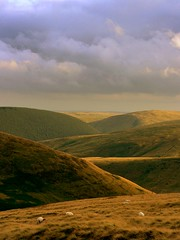 Evening in the Cheviots (Ray Byrne) Tags: uk england sunlight grass rural wow landscape countryside sheep unitedkingdom britain country north peaceful hills northumberland canon350d gb northern northeast landscapephotography thecheviots cheviothills creamofthecropmostinteresting raybyrne byrneout