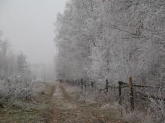 autumn in poland (syfon) Tags: road autumn trees geotagged frost poland polska droga jesie skierniewice drzewa szron flickrfly geolat519869166017763 geolon2016951239614745 getilt421254851283373 gehead4434066711817892 gerange1358677730365122