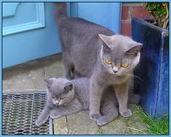Love and proctection (Dimilinchen) Tags: cats topv111 kitten