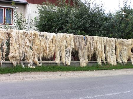 Drying wool