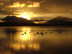 loch of stenness (spaniel shari) Tags: sunset reflection silhouette clouds landscape top20np swan orkney top20sunrisesunset magical 555v5f scoreme43 calendarshot specland fcsetsrises