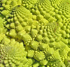 paisaje extraterrestre (Micheo) Tags: school food macro comida alien best explore escuela mathematics fractal et success romanesco mejores matematicas romanescu alienigena xito romescu micheo broccliflower