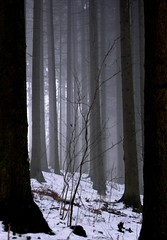 Spooky woods (Linda6769) Tags: schnee winter mist snow tree germany woods village thuringia explore february spruce baum conifer nadelbaum hildburghausen konifere explored nobw brden koniferenimwinter coniferinsnow