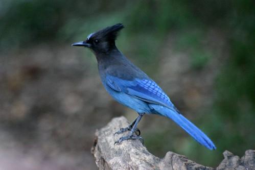 blue frock