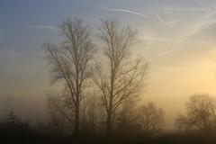 misty morning 10.12.2016 -p4d- 014 (photos4dreams) Tags: mistymorning10122016p4d winter photos4dreams p4d photos4dreamz photo rauhreif frosty rime hoarfrost landschaft landscape