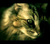 (parade in the sky) Tags: pet animal cat scary furry creepy spooky whiskers artlibre cvt40