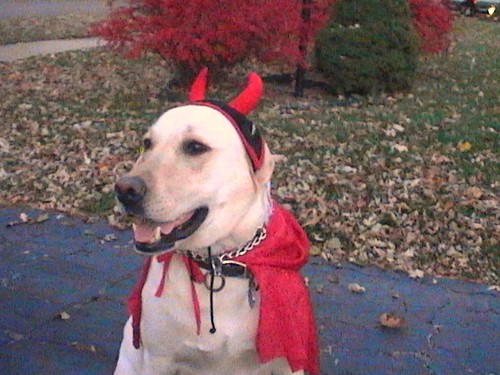 Reilly the Devil Dog (Halloween)