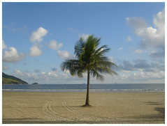Tree in the sea breeze. (rps.net) Tags: brazil beach sunshine brasil sand santos tropical coconuttree breeze atlanticocean diamondclassphotographer