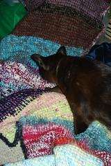 blanket pose
