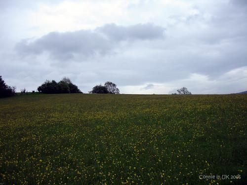 草原不僅是綠油油的,還有小黃花