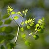 Fresh (olvwu | 莫方) Tags: usa macro green canon ga georgia leaf 100mm savannah jungpangwu oliverwu oliverjpwu canonef100mmmacrof28usmlens olvwu jungpang 莫方 吳榮邦