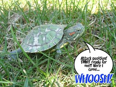 Turtle tales...