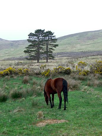 aasleagh-horse
