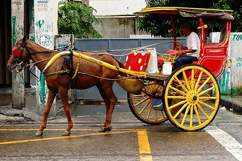 Manila horse calesa kalesa driver street cart city Pinoy Filipino Pilipino Buhay  people pictures photos life Philippinen  菲律宾  菲律賓  필리핀(공화국) Philippines