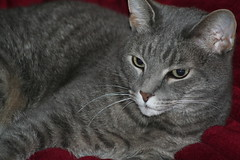 sampson 1 (Brent M. & Rene Lacy) Tags: nature animal cat shot posted retouch zero