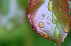 Foglia close up! (Signalkuppe 4:3) Tags: macro rain drop foglia rugiada vclm3367
