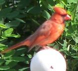 bird_a