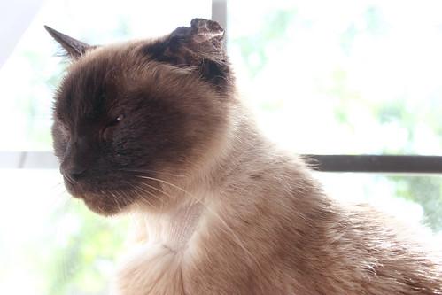 cat illnesses wallpaper