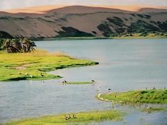 CROCODILES LAGOON, BAZARUTO (André Pipa) Tags: africa lake nature birds wonder lago scenery natureza mozambique crocodiles moçambique bazaruto crocodilos giantdunes dunasgigantes maravilhanatural andrépipa photobyandrépipa