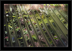 Deck Reflections (Barbara J H) Tags: water reflections garden timber australia deck qld decking maroochydore project365 instantfave 070507 anawesomeshot barbarajh australia2007daybydayonephotoaday daybyday2007 auselite 7thmay2007 deckreflections timberdecking